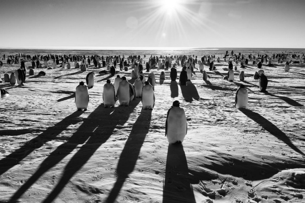 Ultimate Shore Excursions: Camping with penguins