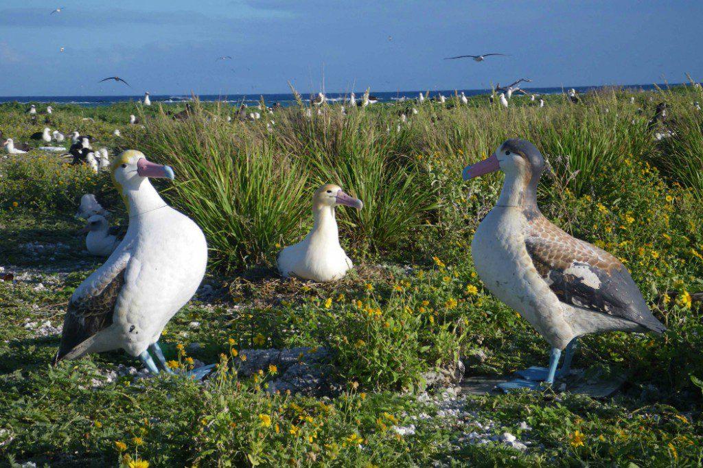 Wildlife: Albatross