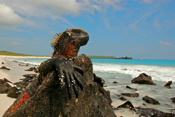 Places: Galapagos