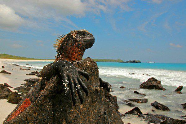 Places: Galapagos