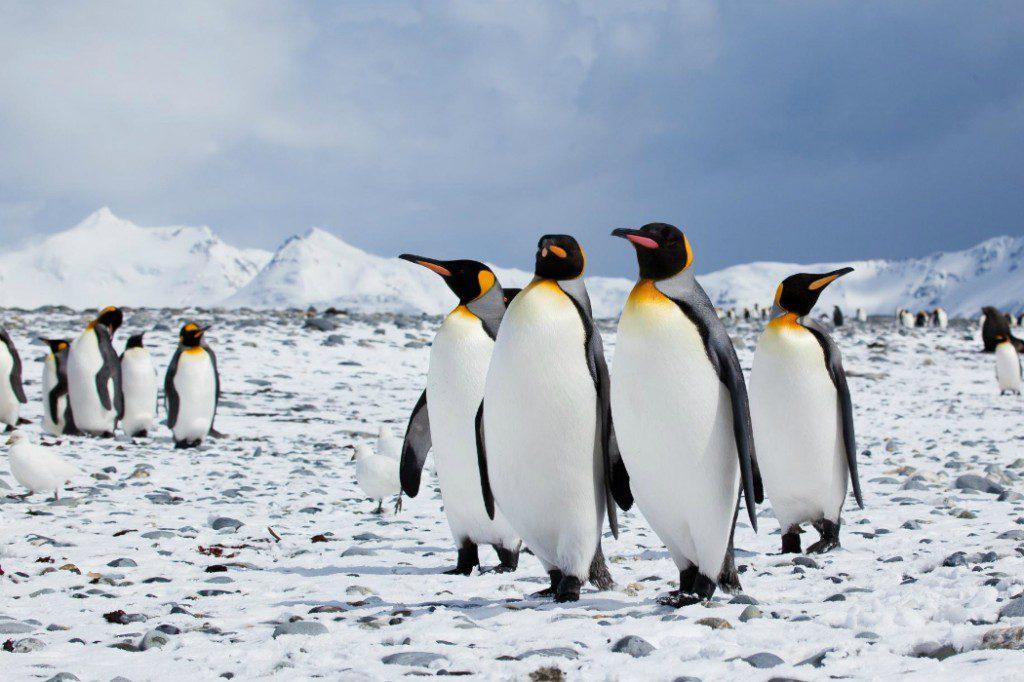 Wildlife: Penguins