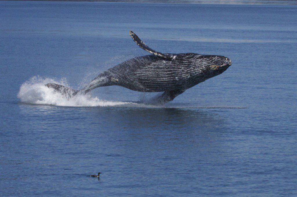 Wildlife: Whale