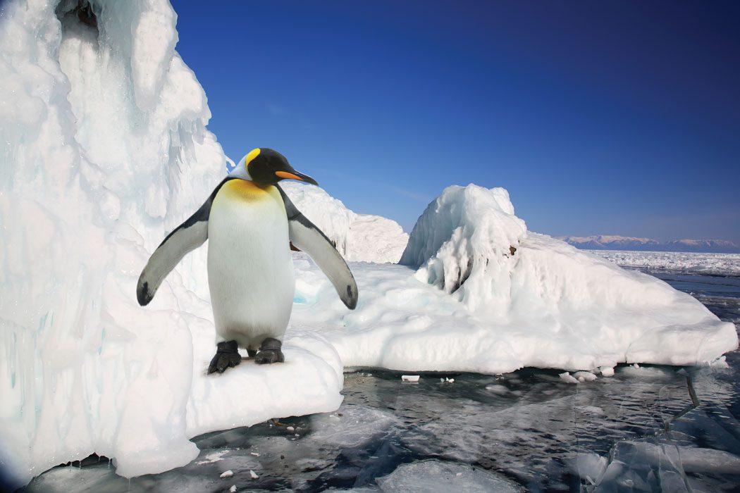 Antarctica-XXI