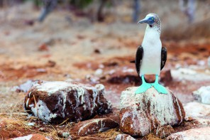 Natural selection: Silversea in the Galápagos Islands