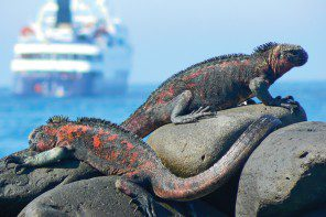 Celebrity Cruises in the Galápagos Islands